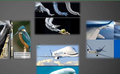 بیومیمتیک و زیست الهام